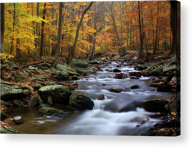 Autumn Acrylic Print featuring the photograph Autumnal Face by Mitch Cat