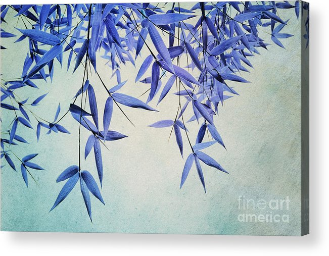 Bamboo Acrylic Print featuring the photograph Bamboo Susurration by Priska Wettstein