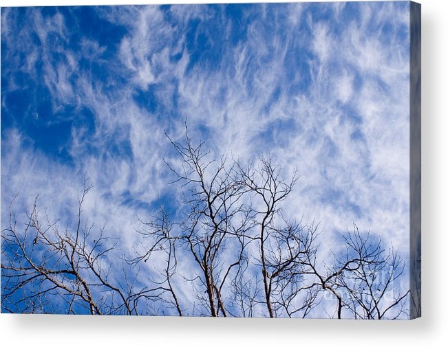 Nature Acrylic Print featuring the photograph Bare Winter Branches In California by Julia Hiebaum