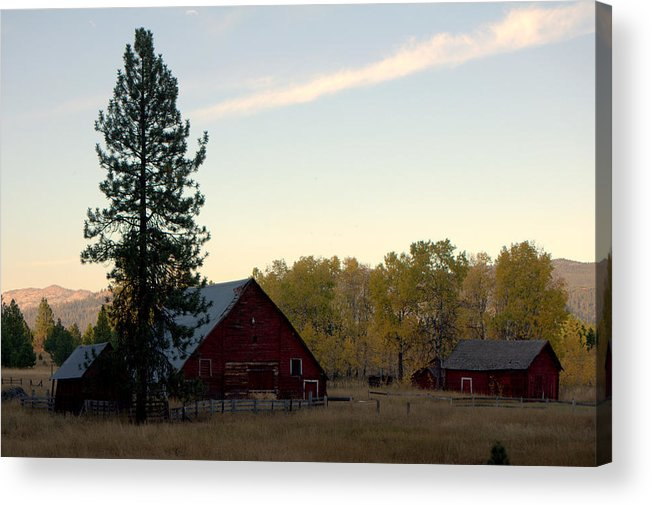 Acrylic Print featuring the pyrography Barns by Dave Lund