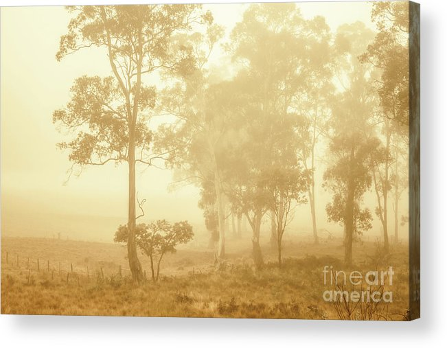 Woodland Acrylic Print featuring the photograph Beauty In A Forest Fog by Jorgo Photography - Wall Art Gallery