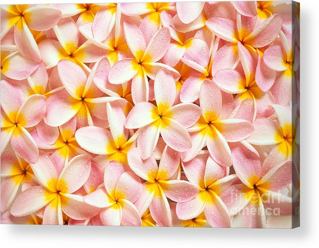 Aloha Acrylic Print featuring the photograph Bed Of Light by Kyle Rothenborg - Printscapes