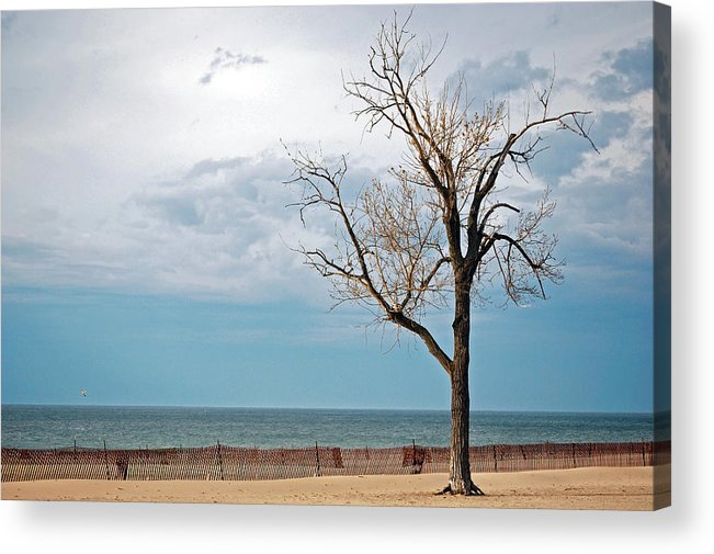 Beech Acrylic Print featuring the photograph Beech On Beach by Maria Dryfhout