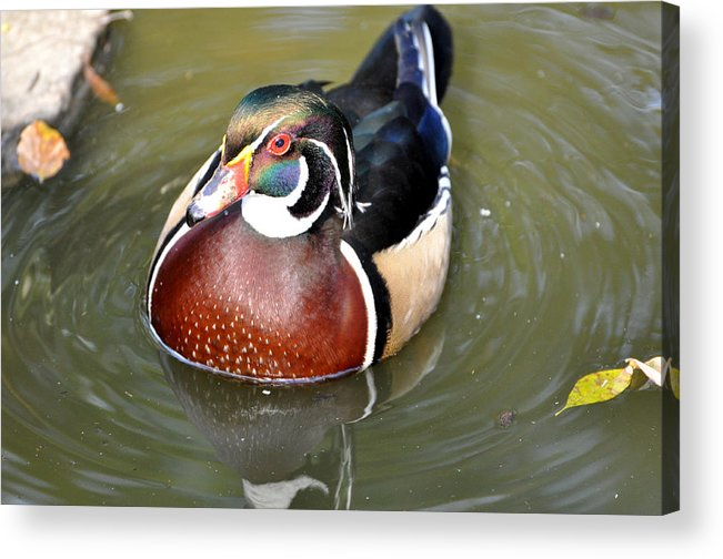Birds Acrylic Print featuring the photograph Best Dressed by Jan Amiss Photography