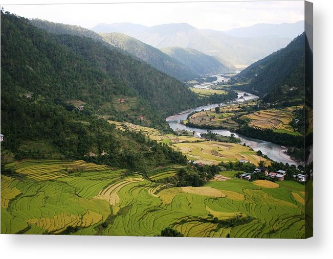Scenery River Winding \rice Fields\ Lush Green View Bhutan \namgyal Choling\ Acrylic Print featuring the photograph Bhutan Rice Fields by Linda Russell