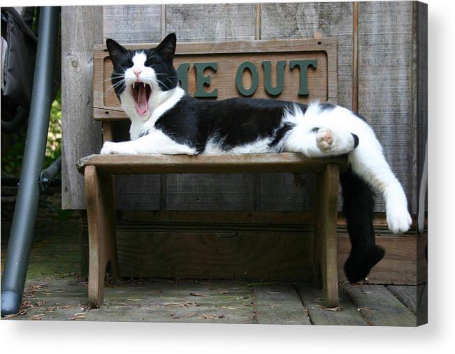 Cat 1 Acrylic Print featuring the photograph Big Yawn by Kevin Dunham