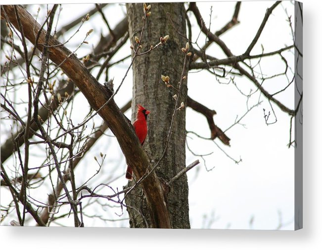 Acrylic Print featuring the photograph Bird In A Tree by Paul SEQUENCE Ferguson       sequence dot net