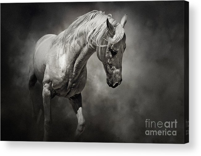 fffd057911e Horse Acrylic Print featuring the photograph Black And White Horse -  Equestrian Art Poster by Dimitar
