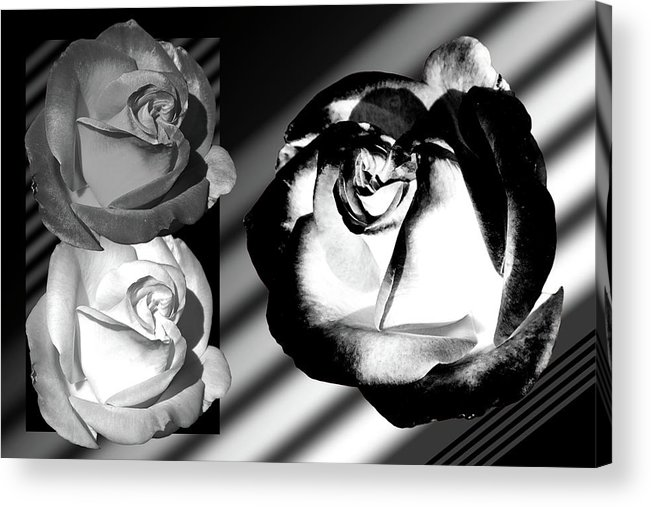 Roses Acrylic Print featuring the photograph Black And White Roses by Phyllis Denton