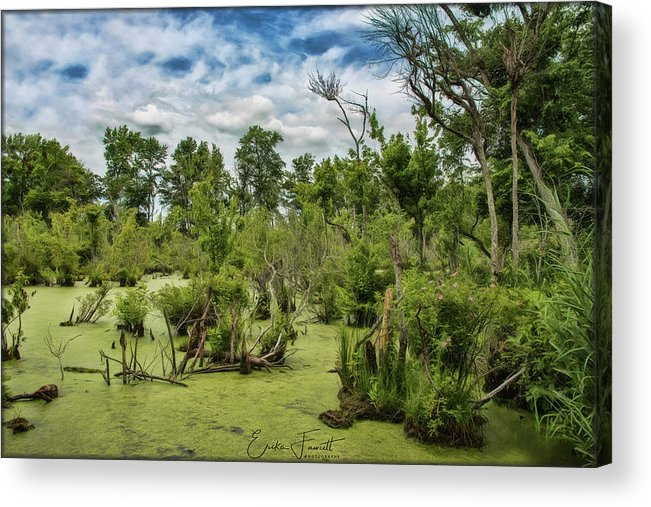 Blackwater Acrylic Print featuring the photograph Blackwater Swamp by Erika Fawcett