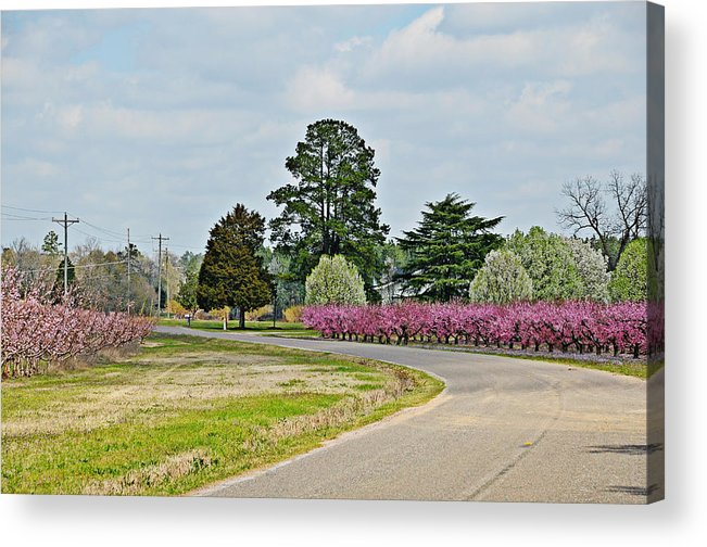 Flowers Acrylic Print featuring the photograph Blossoms Everywhere by Linda Brown