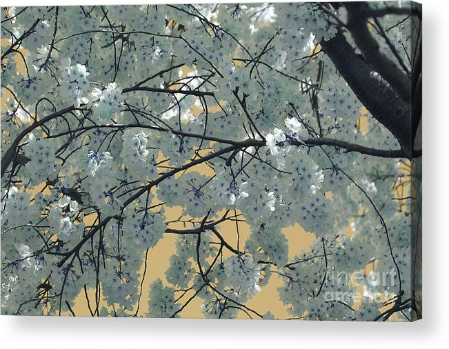 Blossoms Acrylic Print featuring the photograph Blossoms by Katherine Morgan