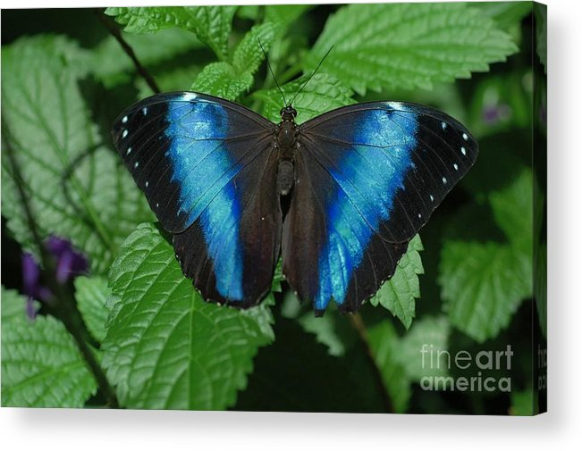 Blue Acrylic Print featuring the photograph Blue And Black by Kathleen Struckle