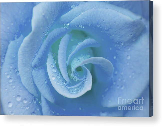 Flower Acrylic Print featuring the photograph Blue Rose by Julia Hiebaum