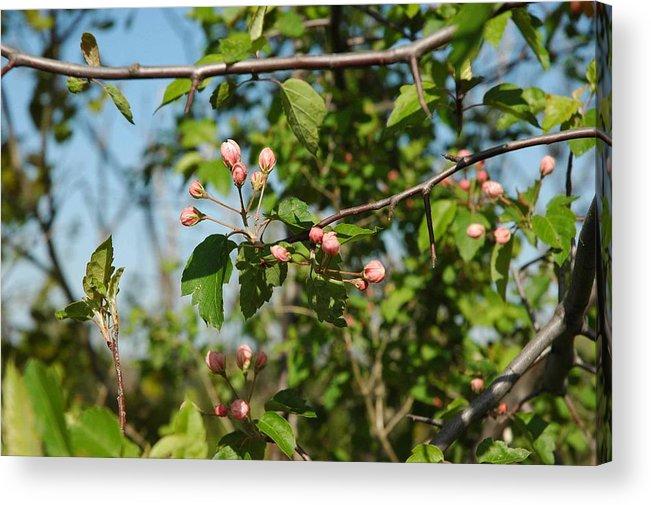Usa Acrylic Print featuring the photograph Blue Sky Pink Blossoms by LeeAnn McLaneGoetz McLaneGoetzStudioLLCcom