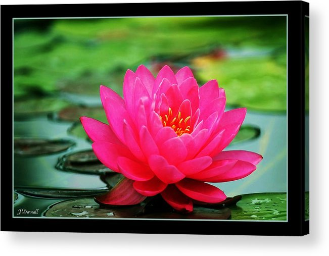 Water Lily Acrylic Print featuring the photograph Bordered Water Lily by Jim Darnall