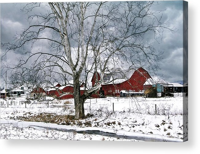 Red Acrylic Print featuring the photograph Branching Out by Stephanie Calhoun