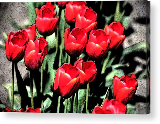 Red Acrylic Print featuring the photograph Brilliant Tulips Dp22 by Mary Gaines
