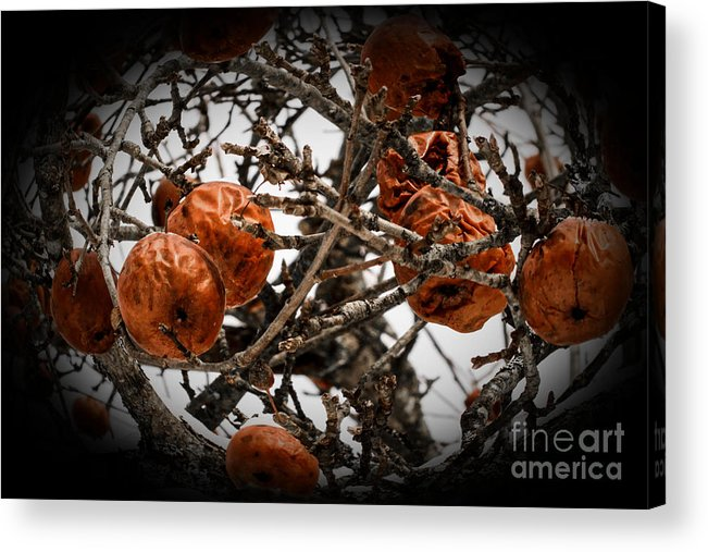 Fruit Acrylic Print featuring the photograph Brown Fruit Abstract by Sherman Perry
