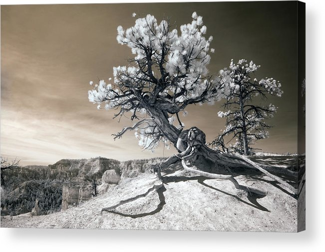 Bryce Acrylic Print featuring the photograph Bryce Canyon Tree Sculpture by Mike Irwin