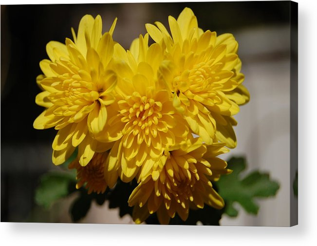 Nature Acrylic Print featuring the photograph Buddies by Rozalia Toth