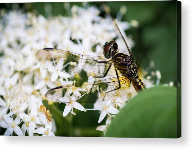 Bugs Acrylic Print featuring the photograph Bugs by James Farrell