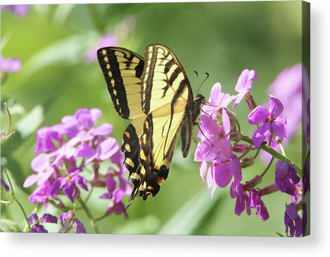 Butterfly Acrylic Print featuring the digital art Butterfly #9 by David Stasiak