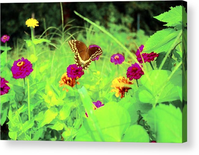Flowers Acrylic Print featuring the photograph Butterfly At Work by Jill Tennison