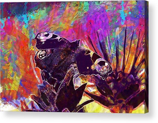 Butterfly Summer Natural Flower Acrylic Print by PixBreak Art
