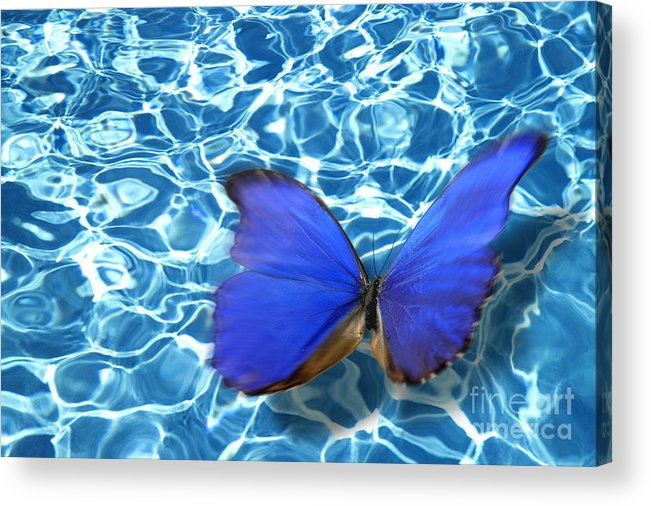 Animals Acrylic Print featuring the photograph Butterfly by Tony Cordoza