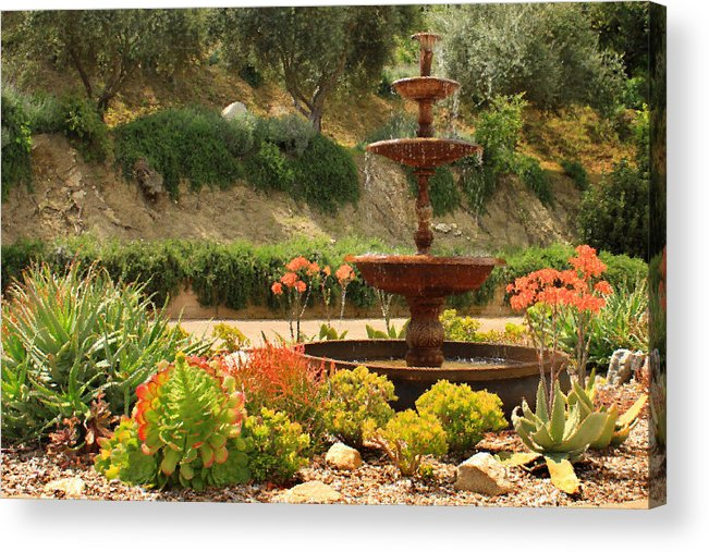 Floral Acrylic Print featuring the photograph Cactus Fountain by James Eddy