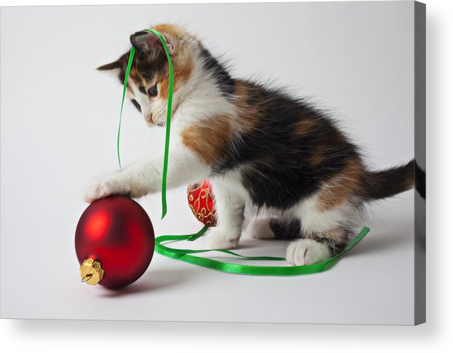 Calico Kitten Christmas Ornaments Acrylic Print featuring the photograph Calico Kitten And Christmas Ornaments by Garry Gay