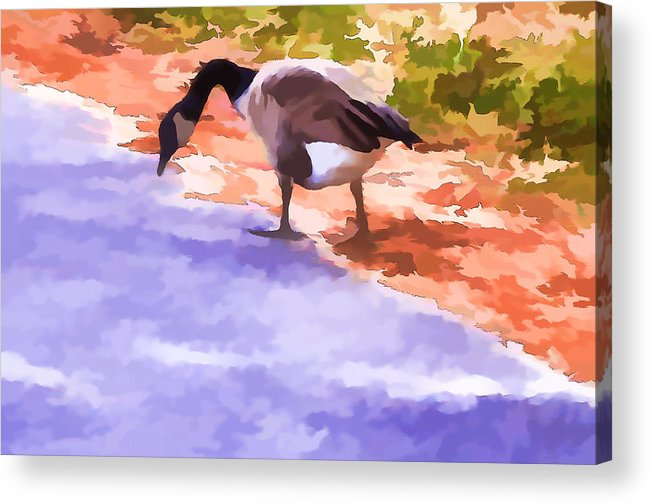 Canadian Geese Acrylic Print featuring the painting Canadian Geese by Jeelan Clark