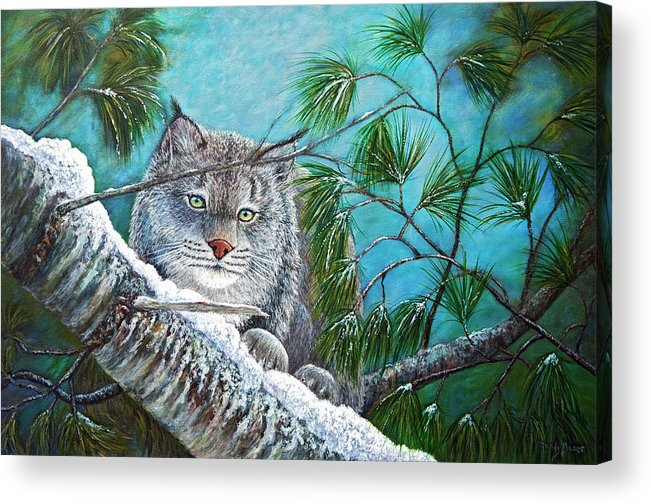 Canada Acrylic Print featuring the painting Canadian Lynx by Sandy Moser