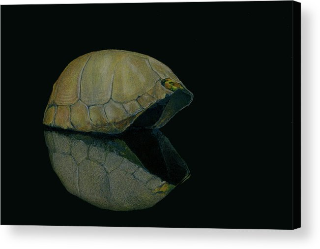 Carapace Acrylic Print featuring the painting Carapace by Catherine Henry