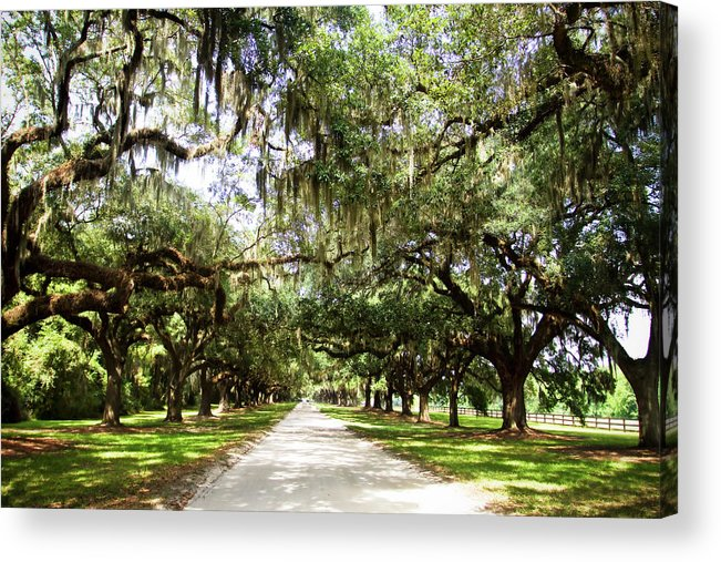 Photo Acrylic Print featuring the photograph Charleston Oaks 1 by Alan Hausenflock