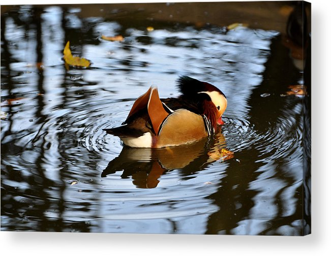 Birds Acrylic Print featuring the photograph Circles by Jan Amiss Photography