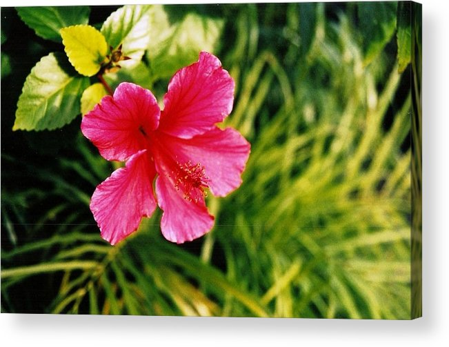 Flower Acrylic Print featuring the photograph Classical Style by Brian Edward Harris