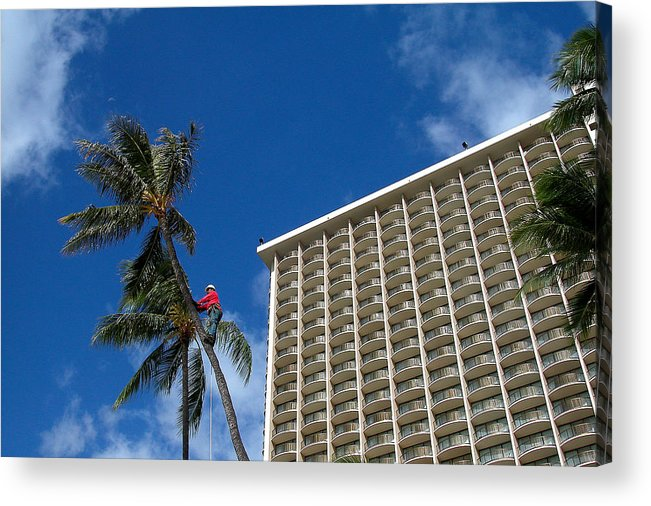 Man Acrylic Print featuring the photograph Climbing A Palm Tree by Carl Purcell