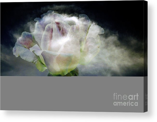 Clay Acrylic Print featuring the photograph Cloud Rose by Clayton Bruster