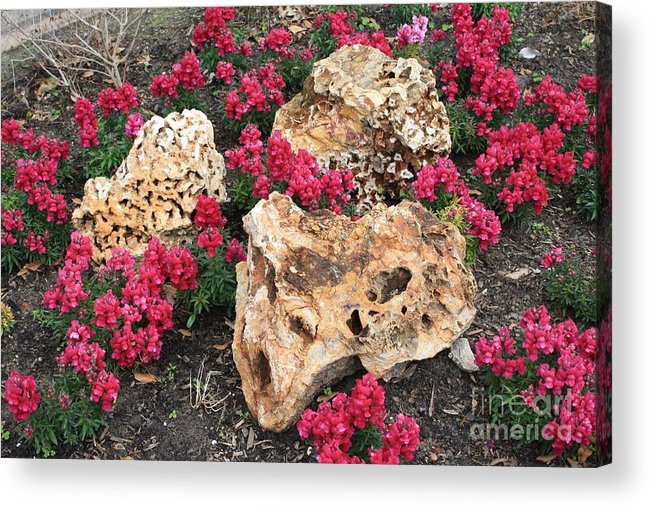 Rocks Acrylic Print featuring the photograph Clusters by John W Smith III
