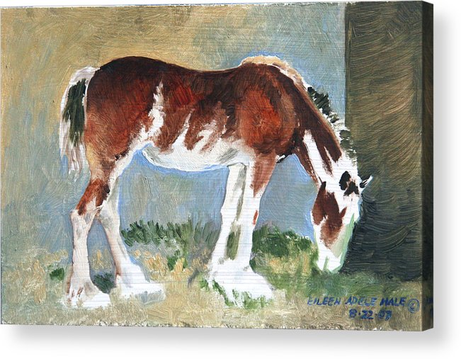 Horse Acrylic Print featuring the painting Clydesdale Colt Pad by Eileen Hale