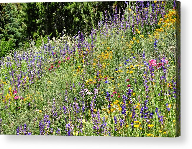 Flowers Acrylic Print featuring the photograph Colorful Colorado by Mandy Wilson