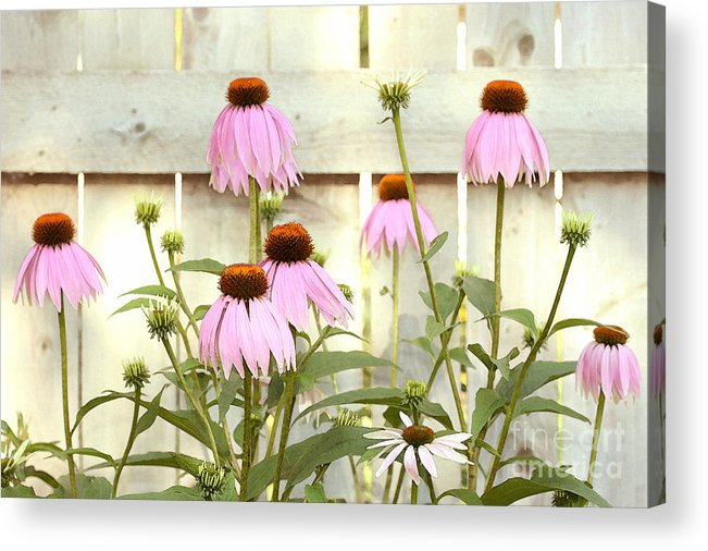 Flower Garden Acrylic Print featuring the photograph Coneflower Patch by Steve Augustin
