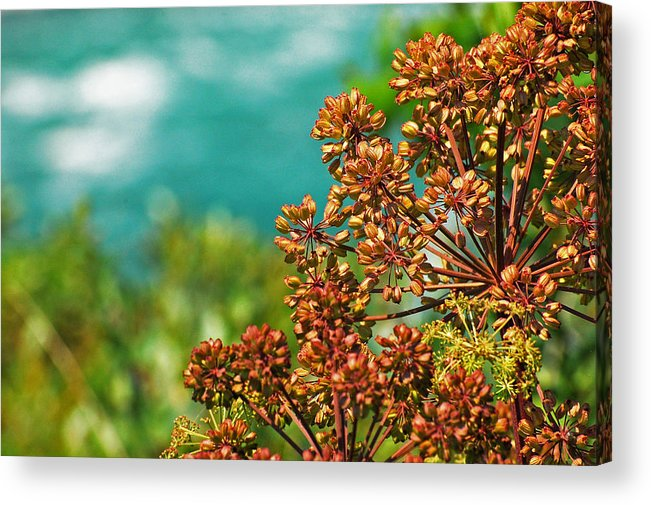 Stalks Acrylic Print featuring the photograph Cool Colors by Jean Booth