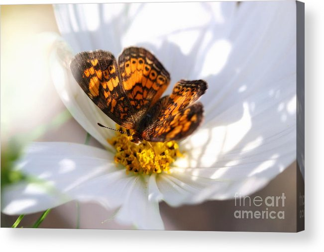 White Acrylic Print featuring the photograph Cosmo Visitor 2 by Angela Rath