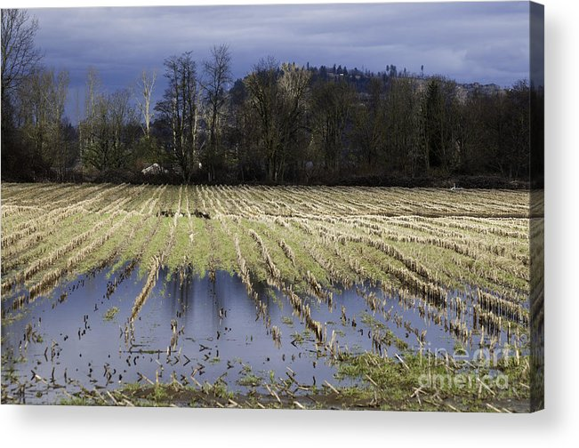 Art Acrylic Print featuring the photograph Country Living Eh by Clayton Bruster