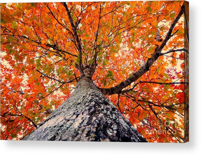 Fall Acrylic Print featuring the photograph Covered In Fall by David Lee Thompson