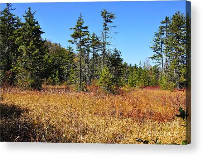 West Virginia Acrylic Print featuring the photograph Cranberry Glades by Thomas R Fletcher