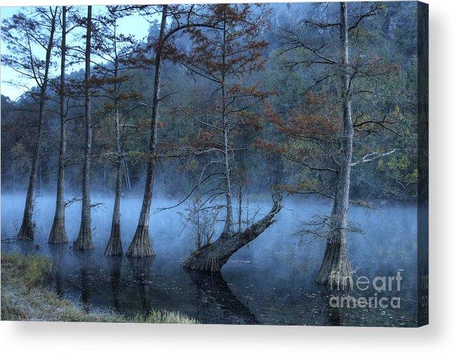 Mist Acrylic Print featuring the photograph Cypress Awakening by Tamyra Ayles